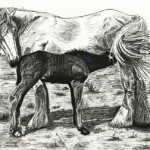 Shire Horse with Foal