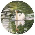 Swan Reflection